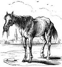 CavalloChishotte.jpg