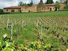 Château de Bagnols vineyard 1.jpg