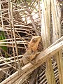 Chamaleon b.jpg