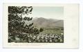 Chautauqua Grounds, Boulder, Colo (NYPL b12647398-62977).tiff