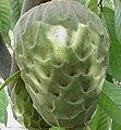 Cherimoya fruit.jpg