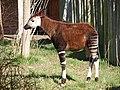 Chester Zoo (8883066451).jpg