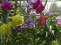Chiang Mai Orchids P1110338.JPG