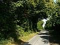 Cholderton Road, near Grateley - geograph.org.uk - 1001295.jpg