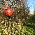 Chory owoc jabłoni 01.jpg