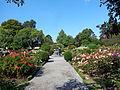 Christchurch Botanic Gardens 08.JPG