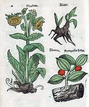 Christian Egenolff - Plate from Herbarum, arborum, fruticum, frumentorum ac leguminem