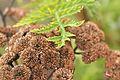 Close-up of plants (482914617).jpg