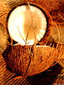 Coconut art 06.jpg