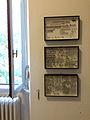 Collezione di coleotteri Museo delle Grigne di Esino Lario 7.jpg
