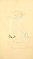 Coloured Figures of English Fungi or Mushrooms - t. 121.png