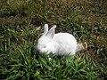 Conejo 1.JPG