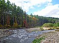 Confluence of east and west branches of Neversink River.jpg