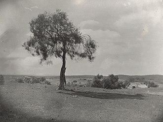 Coolgardie, Western Australia - Coolgardie, Western Australia, 15 March 1928 (f16)