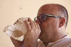 Corn marí dels llaguters al riu Ebre.jpg