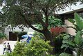 Courtyard UTHSCSA Nima.JPG