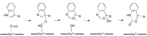 Criegee Rearrangement
