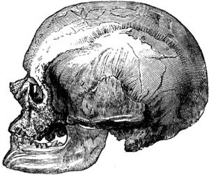 Ertebølle culture - Cro-magnon skull
