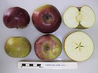 Cross section of Faros, National Fruit Collection (acc. 1948-215).jpg