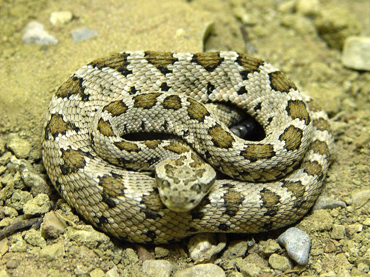 Snakes In San Antonio Locker Room