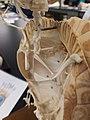 Cryptodira cervical vertebrae.jpg
