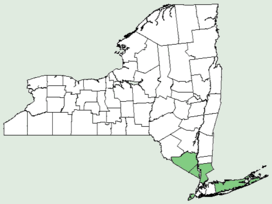 Cunila origanoides NY-dist-map.png