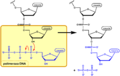 DNA synthesis PL.png