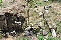 Dacian Fortress of Capalna 085.jpg