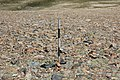 Dana Plateau Plot 101 (11878980324).jpg