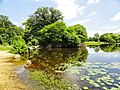 Davidson Mill Pond Park, South Brunswick, New Jersey USA July 15th, 2013 - panoramio (4).jpg