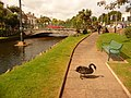 Dawlish, black swan in the gardens - geograph.org.uk - 1469000.jpg