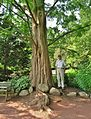 Dawn Redwood in Elizabeth Park, West Hartford, CT - June 22, 2013.jpg