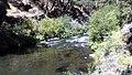 Deer Creek riparian habitat (18471487184).jpg