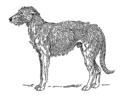 Deerhound (PSF).png