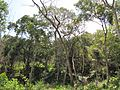 Degradação Florestal Amazônia 24.jpg