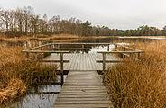 Delleboersterheide – Catspoele Natuurgebied van It Fryske Gea. Libellenvlonder 03.jpg
