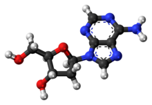 Ball-and-stick model of the deoxyadenosine molecule