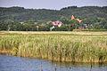 Der Neuensiener See mit Blick auf Lancken-Granitz.jpg