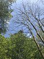 Der Wald als Atem der Erde.jpg