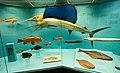 Different kinds of fish, Senckenberg, 2017-10-12 txt.jpg