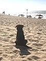Dog ar the beach, Casablanca.jpg