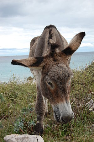Donkey 03.jpg