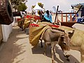 Donkeys carrying loads on Lamu Island.jpg