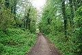 Downs Link near Baynards - geograph.org.uk - 1875807.jpg
