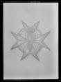 Dräktkraschan för kommendör med stora korset av Vasaorden, Sverige 1800-talets mitt - Livrustkammaren - 60473.tif