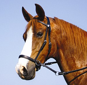 Bitless bridle - A cross-under bridle.