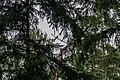 Dubrava Ščomyslickaja natural monument (Belarus) p24 — some bird.jpg