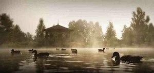 Ducks in the mist at the New-Brunswick Botanic...