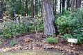 Dunsmuir Botanical Gardens - DSC02917.JPG