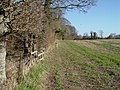 Edge of Sing Close Coppice - geograph.org.uk - 328540.jpg